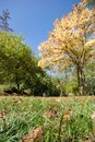 Free Autumn Colors Park Royalty Free Stock Images - 3330949