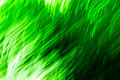 Free Green Texture 627 Stock Images - 3336204