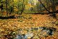 Free Autumn  Mood Royalty Free Stock Photography - 3336427