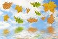 Free Multi-coloured Autumn Leaves Royalty Free Stock Photo - 3339415