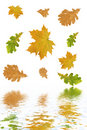 Free Multi-coloured Autumn Leaves Stock Images - 3339424
