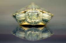 Free Turtle Stock Photo - 3330320