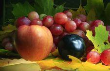 Free Autumn Still Life Stock Image - 3330651
