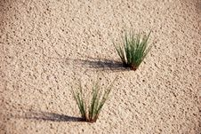 Free Little Piece Of Grass On Sand Stock Photos - 3330833