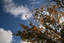 Free Autumn Colour Stock Photo - 3331150
