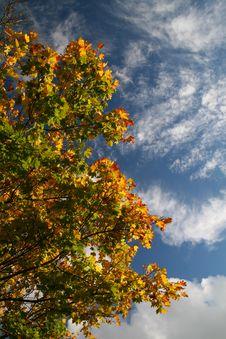 Free Autumn Colour Royalty Free Stock Photography - 3331367