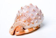 Free Shell On White Background Stock Photo - 3333130