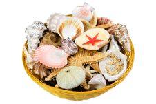 Free Basket Full Of Shells Royalty Free Stock Photos - 3333168