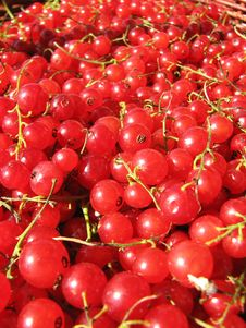 Free Berries Of The Red Currant Royalty Free Stock Photos - 3333318
