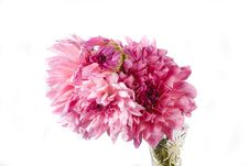 Free Dahlia Royalty Free Stock Images - 3333579