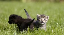 Free Kitty Stock Images - 3334184