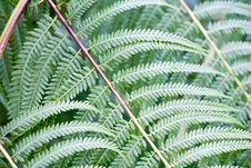 Free Fern Leaf - Close-up Stock Photography - 3334682