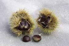 Free Chestnuts Stock Photos - 3335013