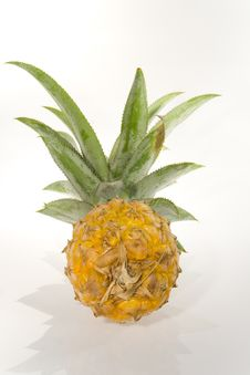 Free The Pineapple Stock Photography - 3335702