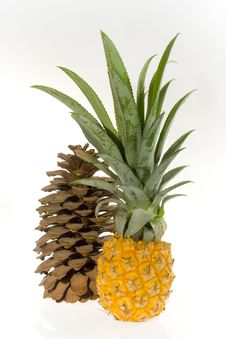 Free Pineapple And Cedar Cone Royalty Free Stock Images - 3335729