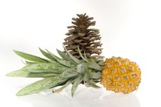 Free Pineapple And Cedar Cone Royalty Free Stock Photo - 3335825