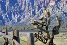Free Yucca Tree At Red Rock Canyon Royalty Free Stock Photography - 3336157