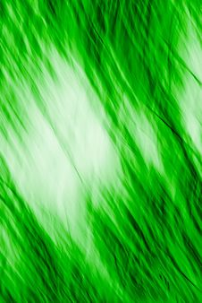 Free Green Texture 635 Royalty Free Stock Photography - 3336217