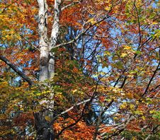 Free Colorful Tree Stock Photography - 3336342