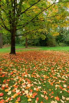 Free Autumn Leaves Royalty Free Stock Photography - 3337617
