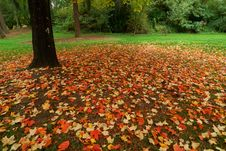 Free Red Leaves Royalty Free Stock Photos - 3337678