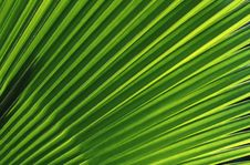 Free Green Leaves Stock Images - 3338534