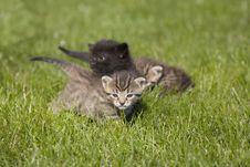 Free Kitty Royalty Free Stock Image - 3338786