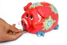 Free Piggy Bank Royalty Free Stock Photos - 3339048