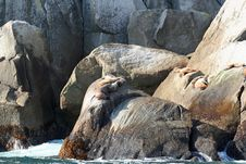 Free Resting Seals Stock Photo - 3339280
