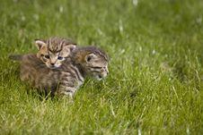 Free Kitty Stock Photo - 3339370