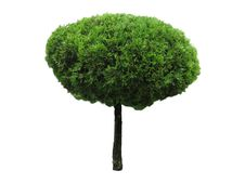 Free Green Beautiful And Roundl Tree Isolated Stock Images - 33304324