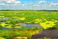 Free The Beautiful Marsh Royalty Free Stock Image - 33317166