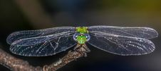 Free Green And Blue Dragonfly Closeup Stock Photos - 33311853