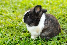 Bunny Rabbit Sits Quietly On The Lawn. Royalty Free Stock Photography