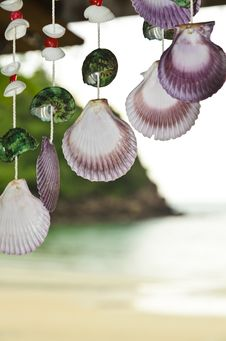 Free Shells Hanging Stock Photos - 33320993