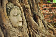 Free Head Buddha Stock Photos - 33324803