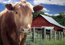 Free Cattle Ranch Royalty Free Stock Photography - 33330167