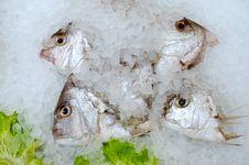 Free Fish Heads Royalty Free Stock Photos - 33332668