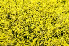 Free Fresh Yellow Leaves Royalty Free Stock Images - 33336759