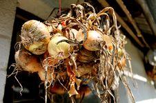 Free Onion Stock Image - 33340261