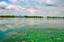 Free The Water Lilies Royalty Free Stock Photos - 33340988