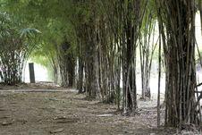 Free Bamboo Park Royalty Free Stock Photo - 33341095