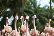 Free Flamingo Stock Photos - 33342883