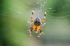 Spider Cross Royalty Free Stock Photography