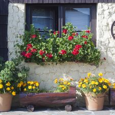 Window And Street Garden Royalty Free Stock Images