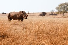 Free Rhinoceros Stock Photos - 33363393