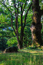 Free Stone Near A Tree In The Forest. Vertical Stock Photography - 33377842