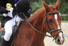 Portrait Of Arabian Stallion Royalty Free Stock Photos