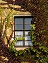 Free Entwined Window Royalty Free Stock Photo - 3340955