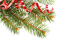 Free Isolated Pine Branch Stock Photos - 3343843
